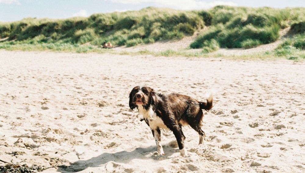 Star Hotels Uk Dog Friendly