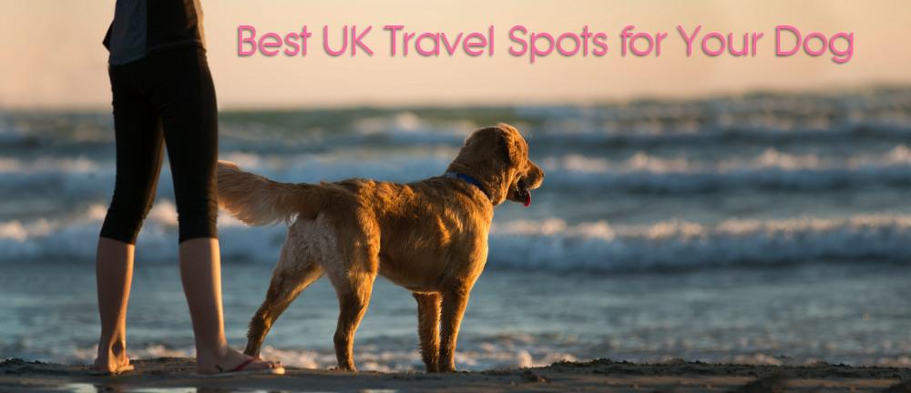 Dog Friendly Accommodation: Best UK Travel Spots for Your Dog