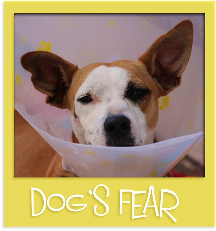 dog's fear gr