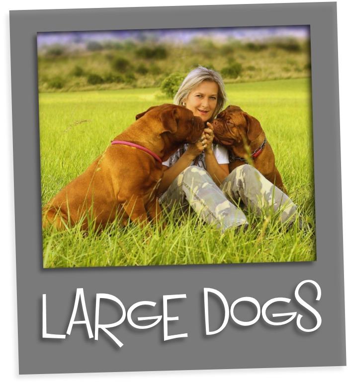 large dogs gr